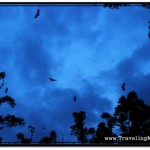 Bats in trees at dusk