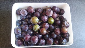 Organic British plums from my parents' garden
