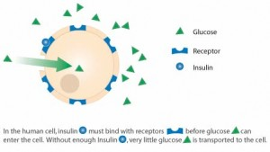 Type 1 diabetes and the cell