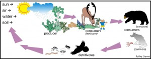 Herbivores, Omnivores, Carnivores and Detritivores